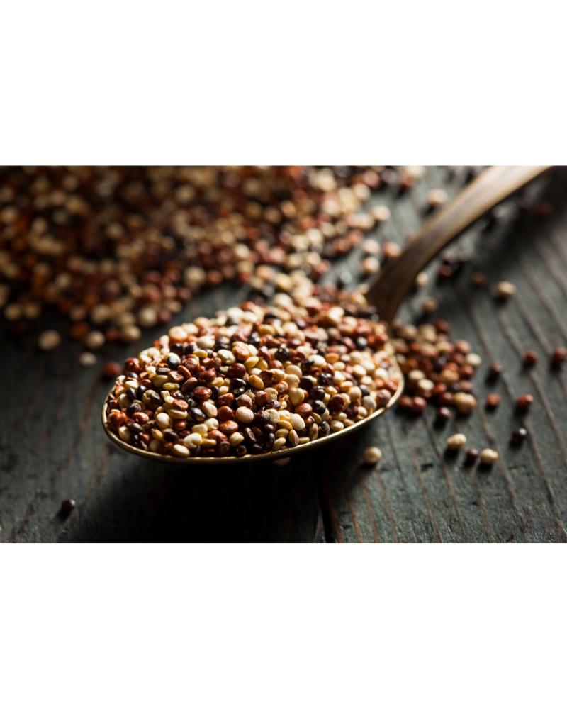 uncooked quinoa grains